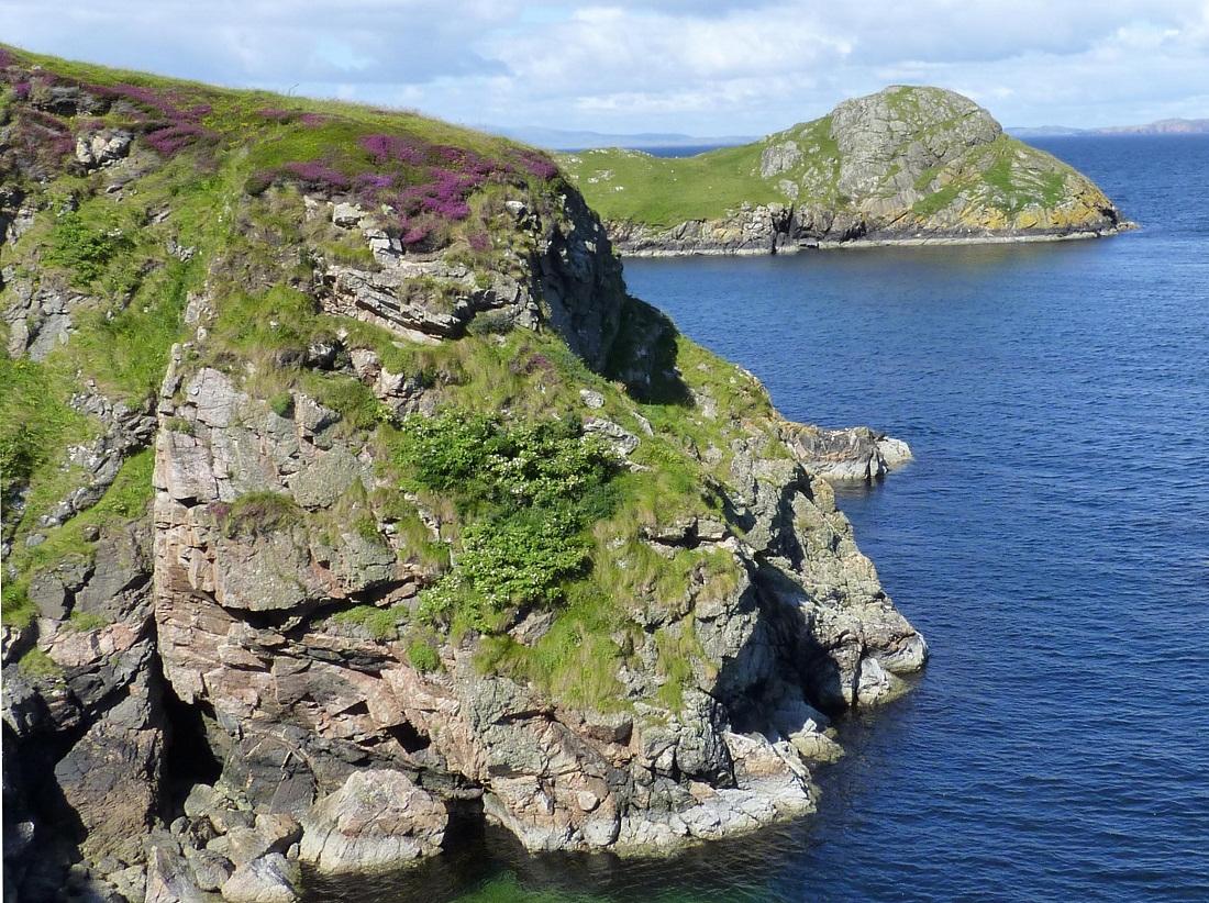 2__Shetland_-_Wild_Dog_Rose.JPG